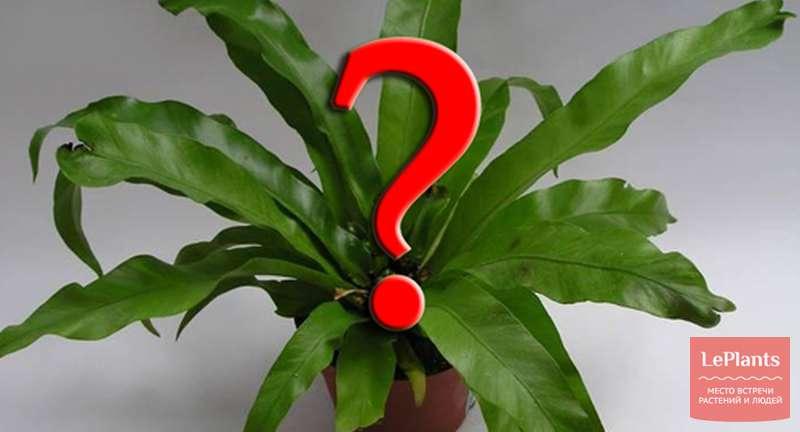 Как стимулировать цветение у разных растений?