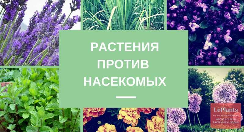 Самые эффективные растения против насекомых