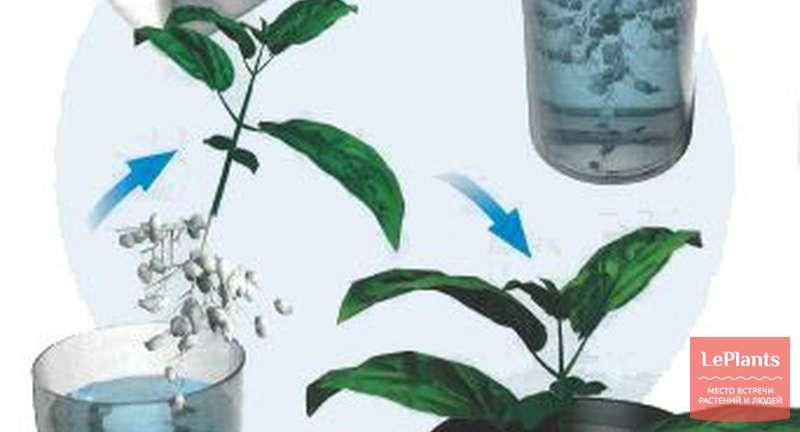 Выращивание гидропоники семена скачать рисунок конопля