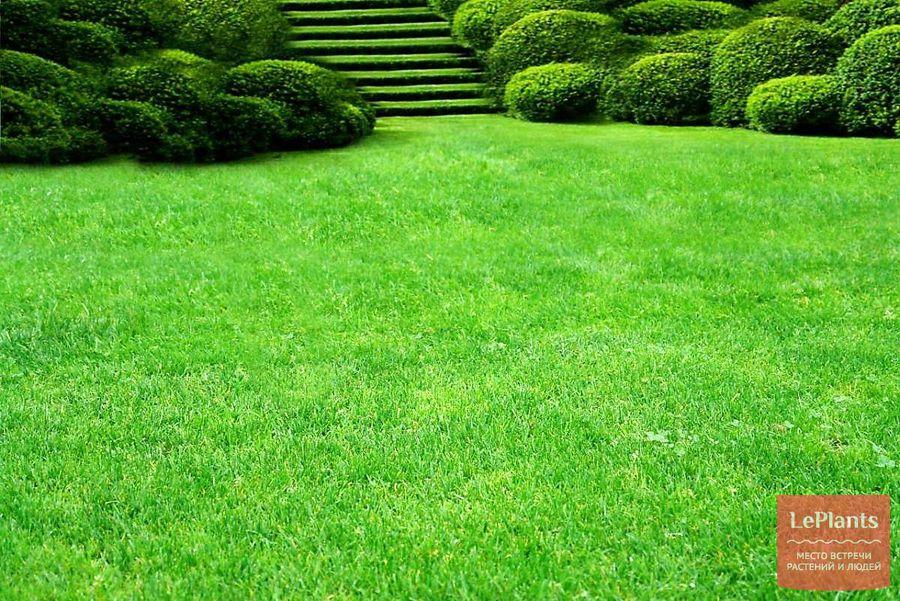 газон — как ухаживать