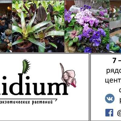 """Международная выставка-ярмарка орхидей и экзотических растений """"Орхидиум"""" стартует 7 сентября"""