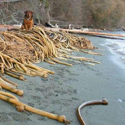 Чукотский полуостров атаковали головастые змеи