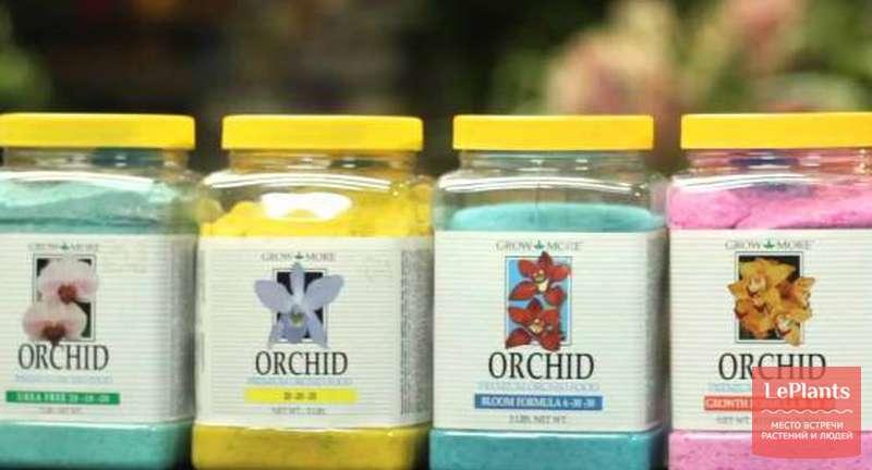 Важные особенности подкормки орхидей