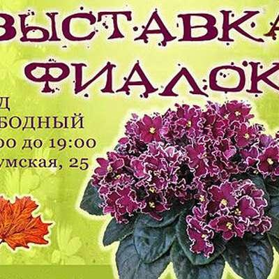 Сотни фиалок покажут на выставке в Харькове