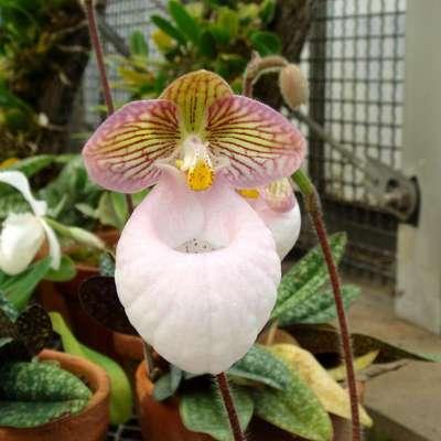 Новые редкие орхидеи представили на выставке «Аптекарского огорода»