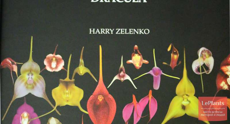 Делимся впечатлениями от книги Orchids Masdevallia with its segregates including Dracula Гарри Зеленко