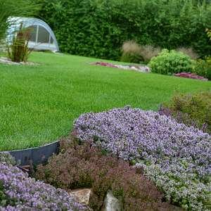 Наши растения в Вашем саду
