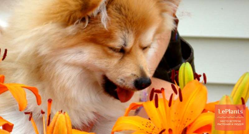 Самые опасные растения для домашних животных