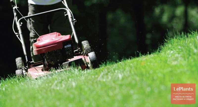 Как выбрать газонокосилку, чтобы косить все лето без забот