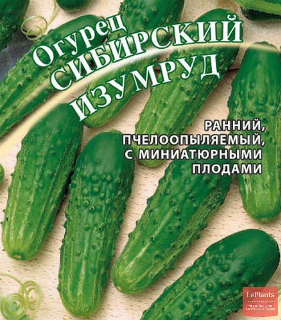 сорт огурцов 'Сибирский изумруд'