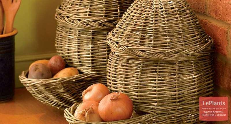 Как сберечь лук до весны в домашних условиях