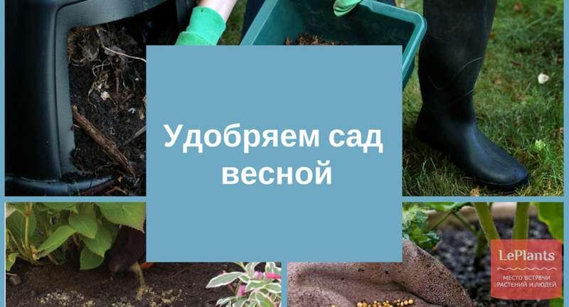 Удобряем сад весной
