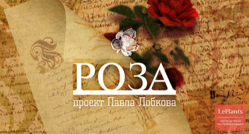 «Роза». Фильм Павла Лобкова
