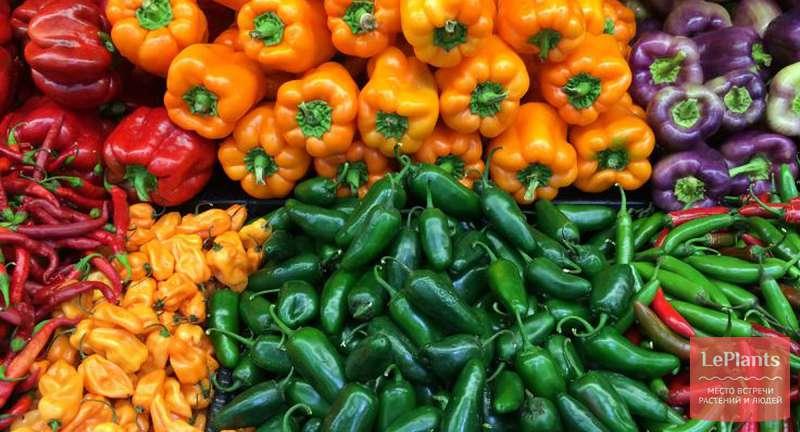 Самые лучшие сорта острого перца — наш экспертный ТОП!