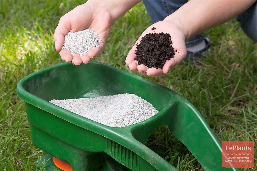 посадка и уход за газоном – удобрение весной