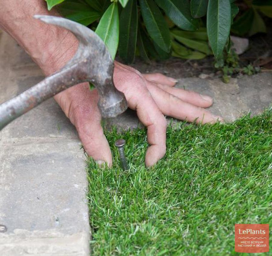 укладка газонной травы