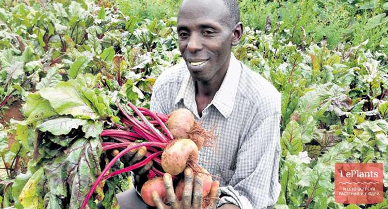 Секреты успешного выращивания свеклы — от посадки до сбора урожая