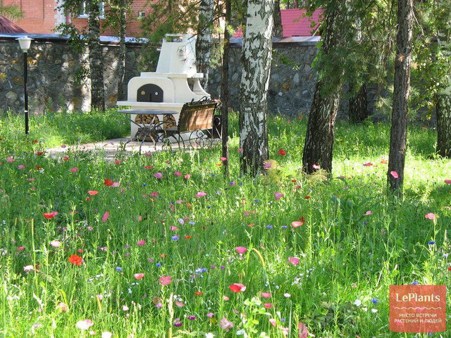 газон из трав и цветов