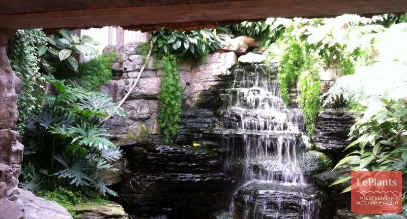 Акклиматизация комнатных растений