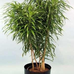 Loli's plants
