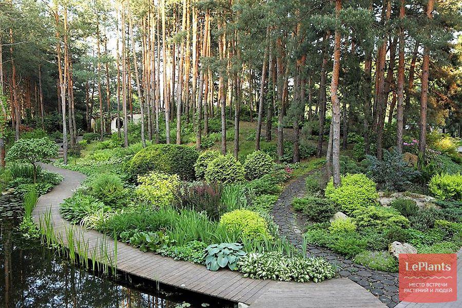 садовые дорожки из спилов дерева